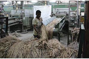 Processing Raw Jute Fibres