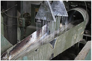 Washing Raw Jute Fibres